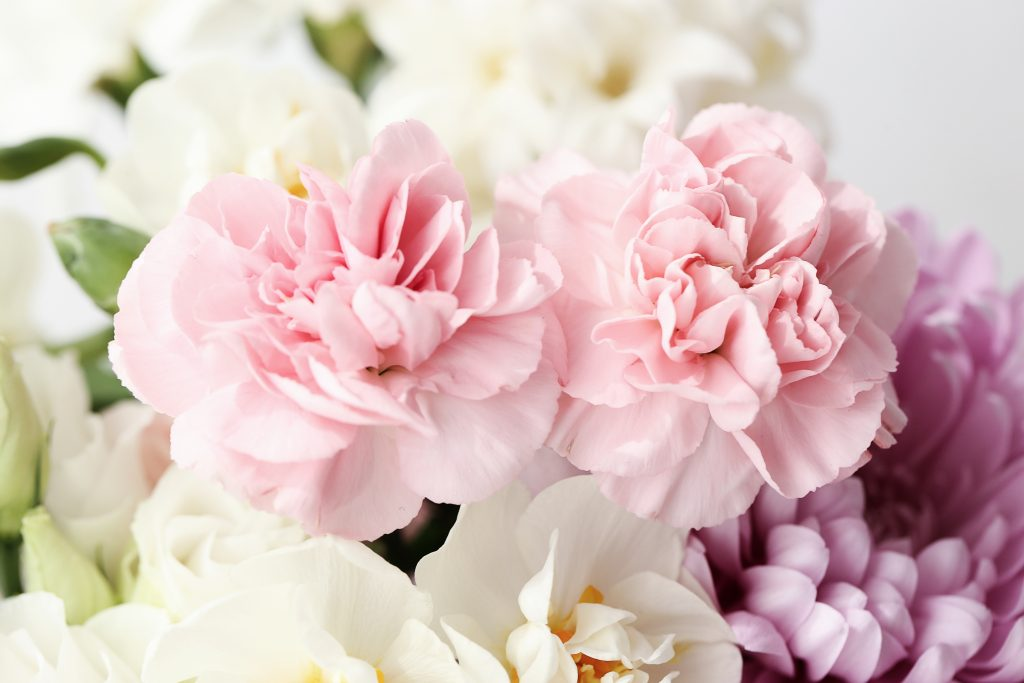 carnations for flower delivery